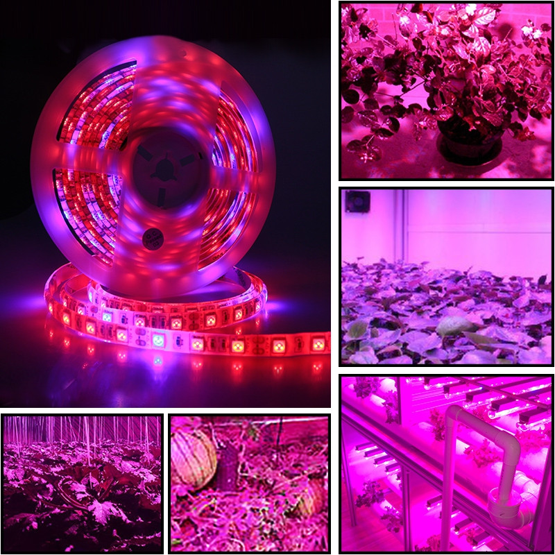5 M LED Waterproof Full Spectrum Strip Light 300 LEDs 5050 Chip Fitolampy Grow Lights For Greenhouse Hydroponic DC12V MULTI 4RED 1BLUE