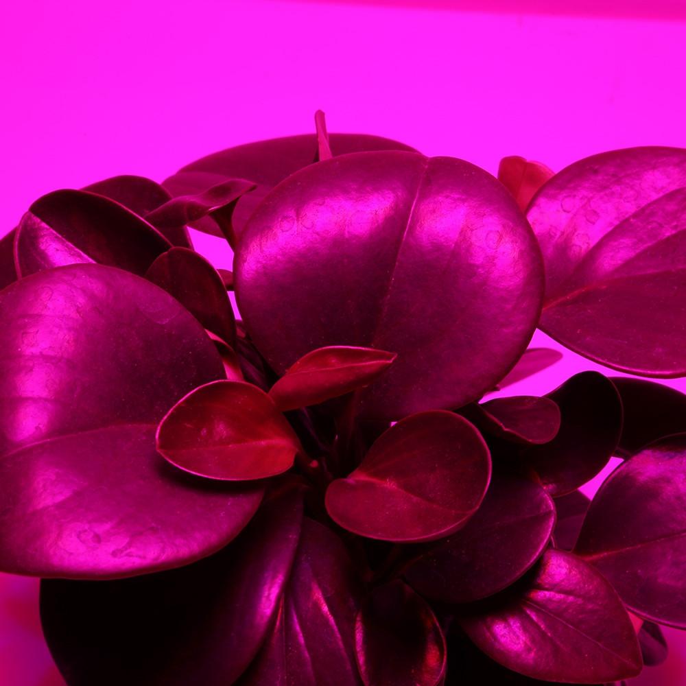 RFC - F300W 100PCS LEDs Grow Light for Veg Flower WHITE US PLUG (3-PIN)